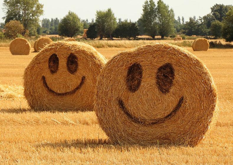AGRICOLTURA: MUSICA, ENOLOGIA, INNOVAZIONE