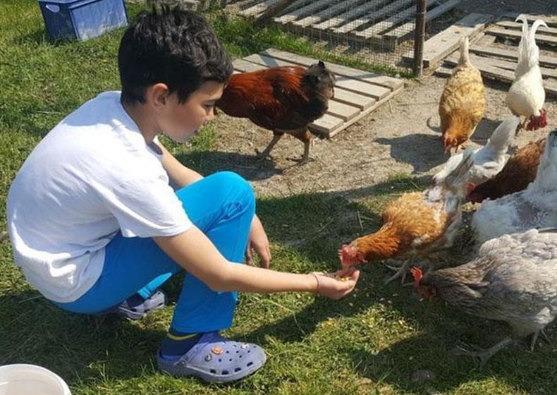 """Damiano Toniolo: """"La Casa è dove si trovano le mie galline"""""""