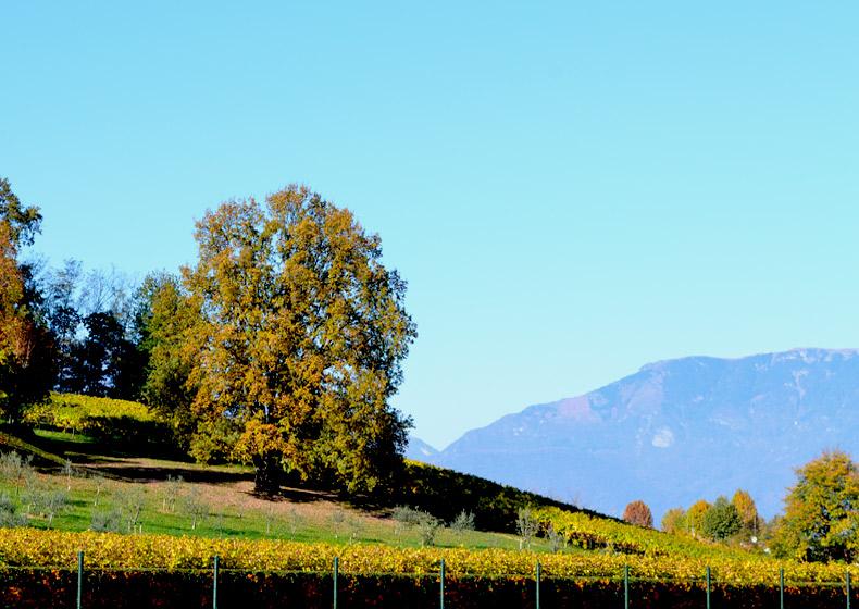 quercia villa lippomano