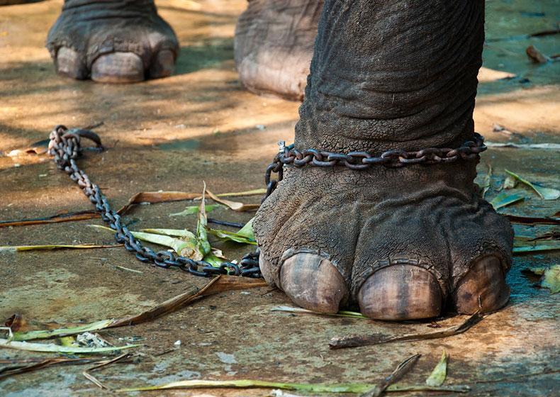 Storia dell'elefante